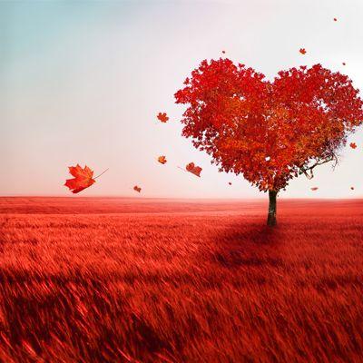 تفاوت عشق و محبت